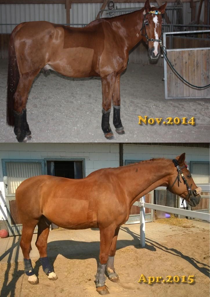 Aron im Nov2014 und Apr2015
