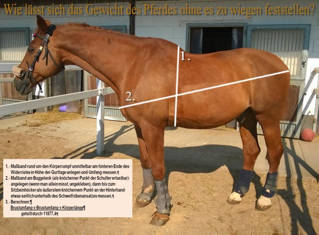 Pferdegewicht messen - ein e Einschätzung des Pferdegewichts