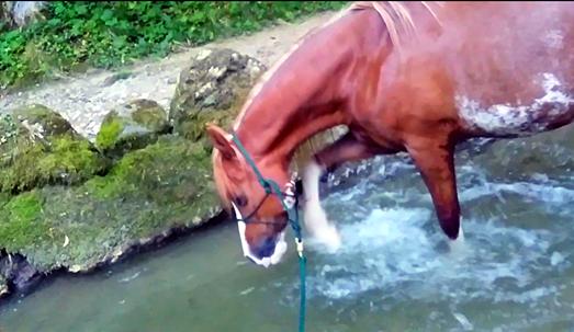 pferd abnehmen trainingsplan