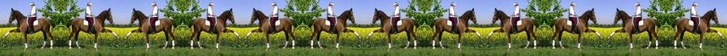 Der mobile Pferdeflüsterer