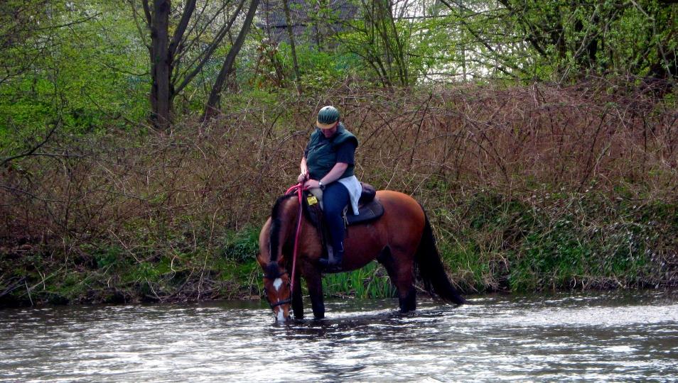 Ausreiten mit dem mobilen Pferdeflüsterer
